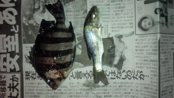 先週の釣り報告