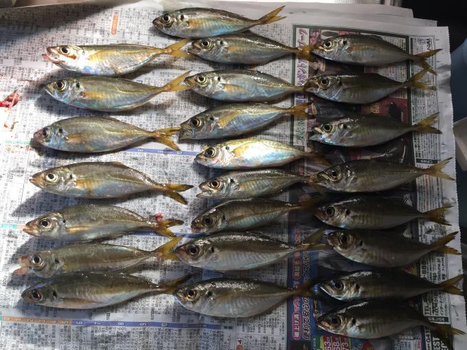 大野漁港でアジ