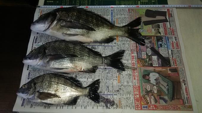 紀州釣りにて