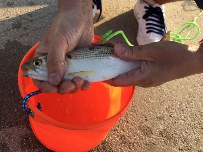 初めての釣り、鬼崎漁港