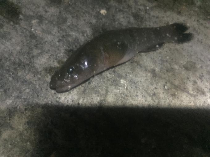 この魚はなんでしょうか?