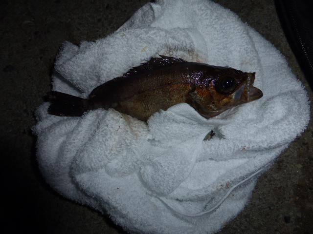 夜の投げ釣り