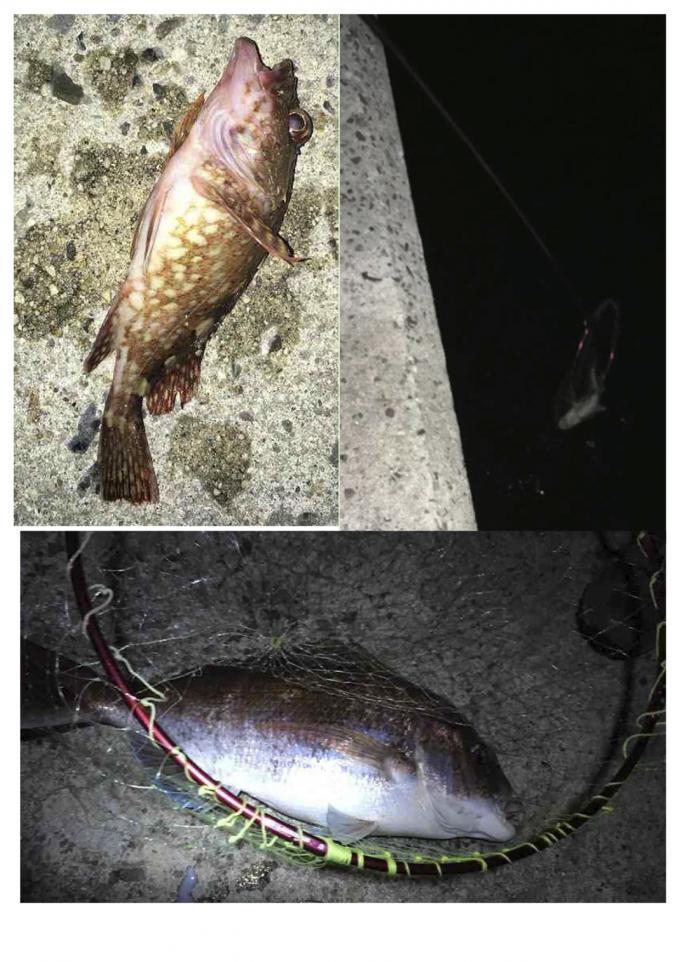 夜釣りでカサゴ
