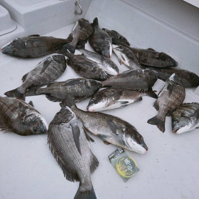 クロダイ爆釣シーズン到来