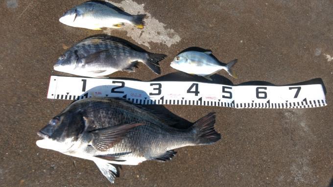 フカセクロダイ釣り