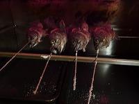 メバルの塩焼き14